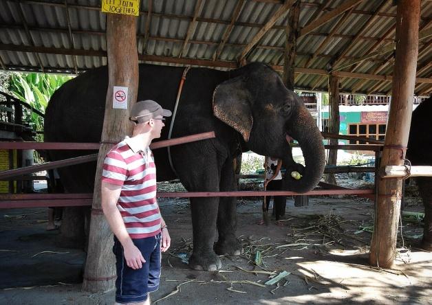 at Tom's Elephants